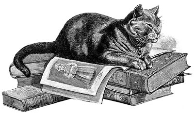 A cat on a pile of books. Could be Oliver.